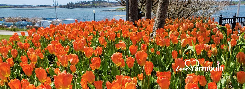 Tulips_Final